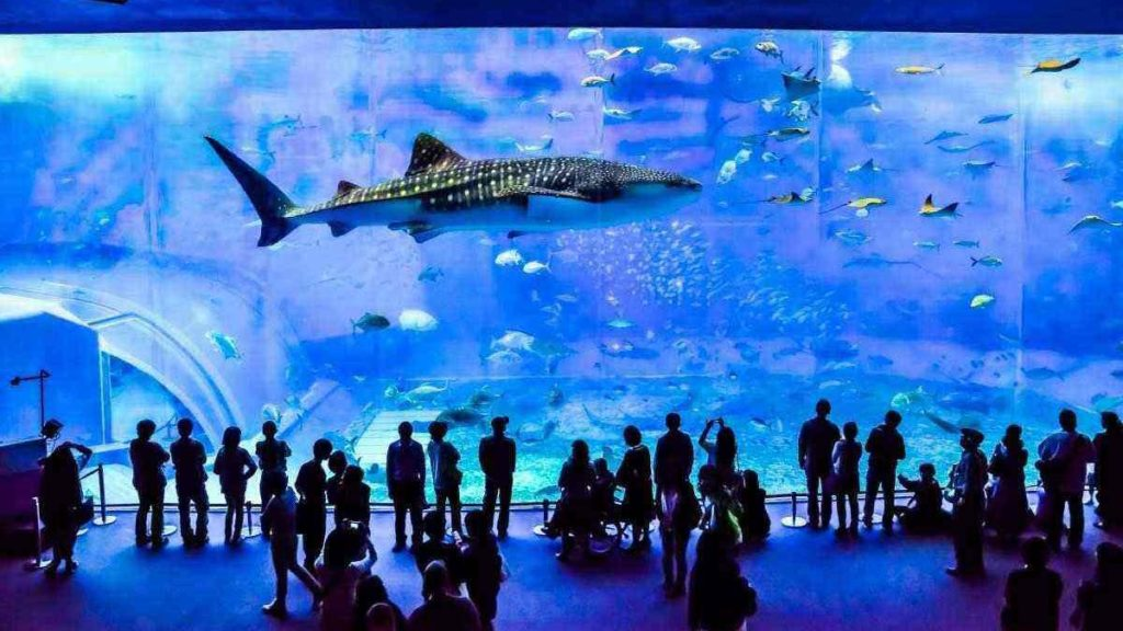 The largest and biggest aquariums in the world - Travel ...